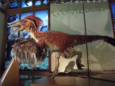 Were Dinosaurs Really Warm-Blooded?: Deinonychus (Wikimedia Commons)