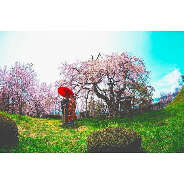 キャプション→青空と桜の下で、、♡ #前撮り#和装#ヘアアレンジ#青空#桜#フォト#カメラ#フォトグラフィー #結婚式#春#花嫁#新郎新婦#群馬#太田#ヴィラデマリアージュ ユーザー→villas_des_mariages_ota 場所→