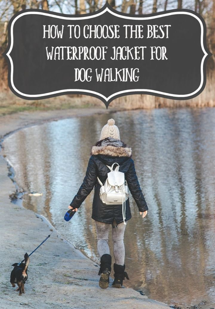 How to Choose the Best Waterproof Jacket for Dog Walking