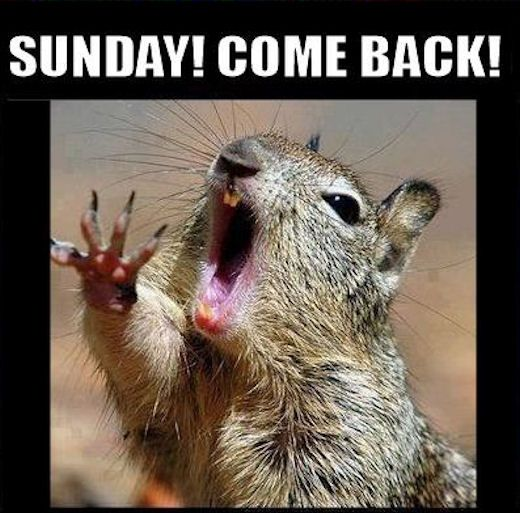 Sunday Come Back quotes quote days of the week monday quotes happy monday monday humor monday morning