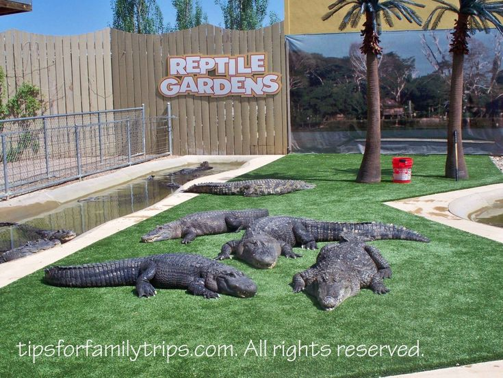 Review of Reptile Gardens, South Dakota | Gardens, There and We