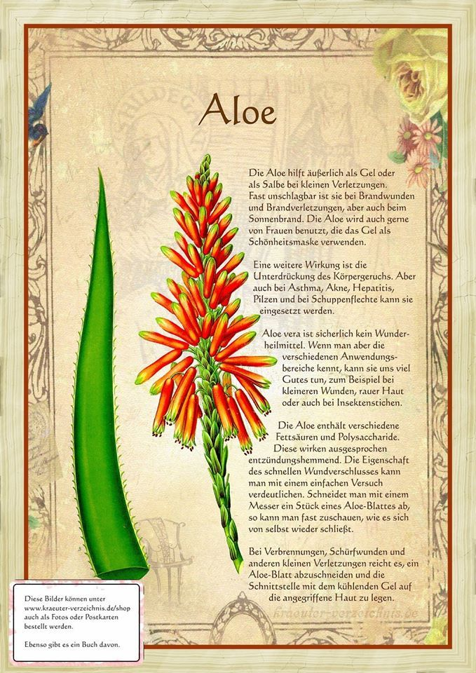 Aloe http://www.kraeuter-verzeichnis.de/