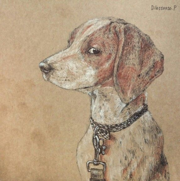#draw #drawing #art #illustration #picture #Beagle #dog #puppy