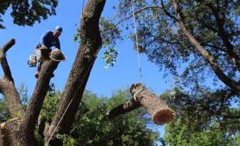 Tree Service #tree #service, #dallas, #tree #removal, #tree #trimming, #arborist, #tree #service #dallas, #texas, #tx, #tree #pruning, #stump #grinding, #stump #removal, #tree #service, #tree, #sales, #tree #cabling, #planting, #richardson, #plano, #garland, #service, #texas, #tx http://south-sudan.remmont.com/tree-service-tree-service-dallas-tree-removal-tree-trimming-arborist-tree-service-dallas-texas-tx-tree-pruning-stump-grinding-stump-removal-tree-service-tree-sales/  # Tree Service…