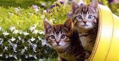 Alejar los gatos del jardín ¿Cómo lograrlo?
