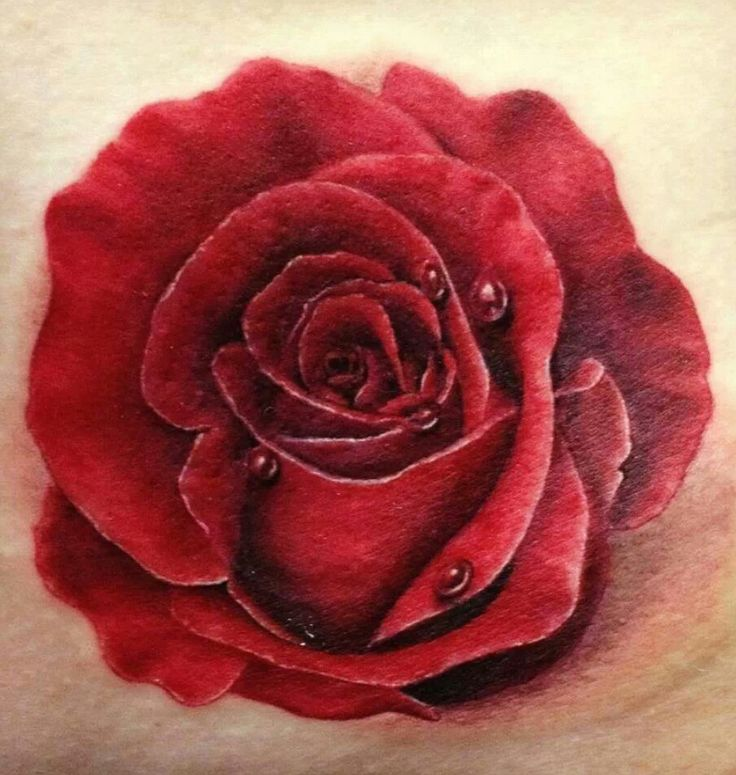 Beautiful Realistic Rose Tattoo Got Me Inked Up Pinterest
