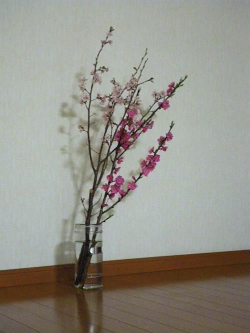 cherry blossom & peach blossom & shadow