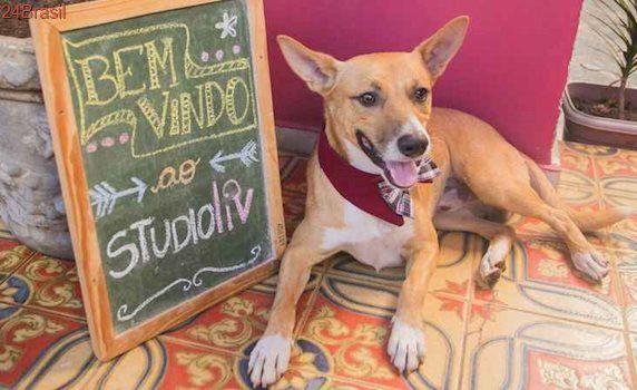 Estúdio de Pilates em BH abre espaço para receber cachorros de alunos
