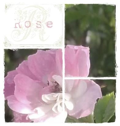 Rose collage.