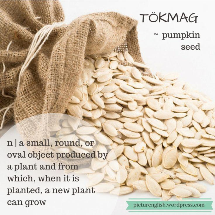 Pumpkin Seed / Tökmag