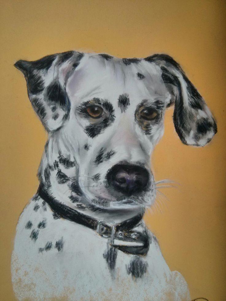 Pastel soft, pastel paper. Dalmatian dog