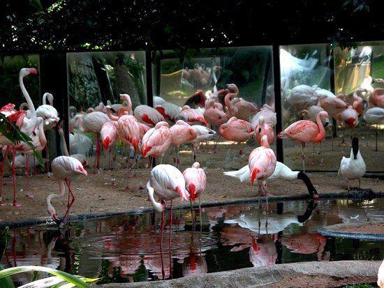 pino l - Brasile, Iguacu - Recensioni dell'utente - TripAdvisor