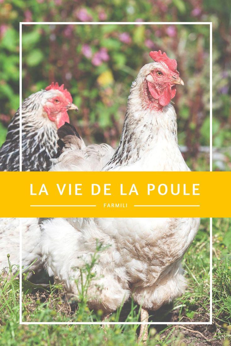 Les 25 meilleures id es de la cat gorie levage industriel for Duree de vie des poules pondeuses