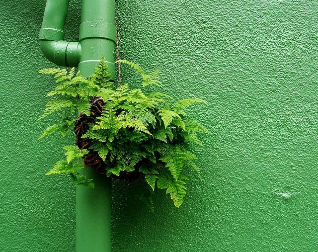 """Green on green by tanakawho, lacking planting space? """"guerrilla gardening""""…"""