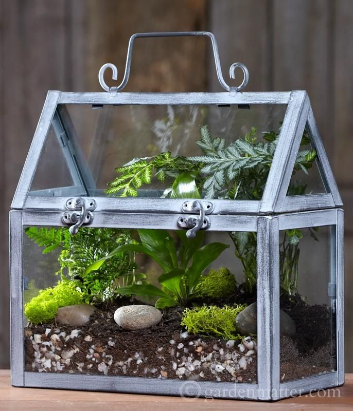 Bringing the Outdoors In, with a Wardian Case - 210 Best Terrarium Images On Pinterest Plants, Terrarium Ideas