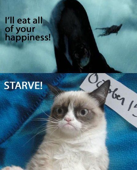 Grumpy cat & Harry Potter