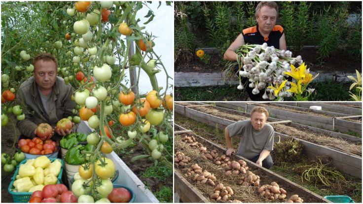 Na žádost mnoha mých přátel vám řeknu, jak jsem začal pěstovat zeleninu. Tato metoda se již ujala u mnohých pěstitelů. Pokusím se to vysvětlit. Pracuji, takže do předměstské oblasti můžu jít jen o víkendech. V současné době v zahradnictví existuje několik problémů: úrodnost půdy klesá. Země se
