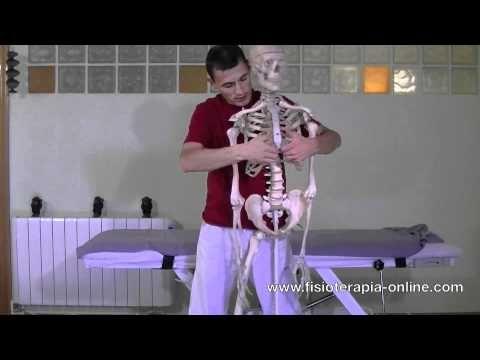 Automasaje y relajación de rebordes costales y del diafragma - YouTube