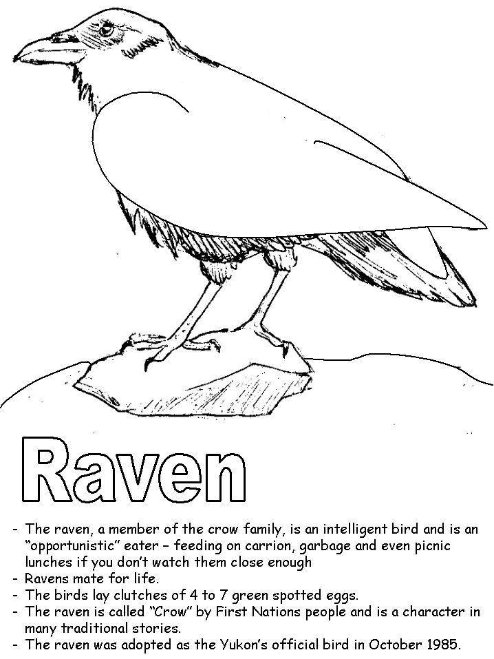 17 best images about edgar allen poe on pinterest clip for Raven coloring pages