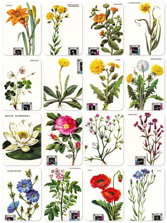 Plantes à fleurs Bestiaire. Ensemble de 16 par RussianSoulVintage