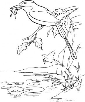1000 images about jungle room on pinterest coloring for Gerri the geranium coloring page