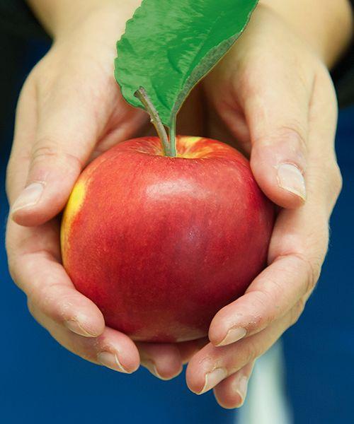 Novinkou pro JARO 2015 v nabídce našeho eshopu je odrůda jabloně vyšlechtěná na Univerzitě Wageningen v Holandsku a určená i pro alergiky - může je totiž konzumovat až 73 % lidí, kteří trpí alergií na jablka. Podrobnosti o jablku najdete zde: http://eshop.starkl.com/jablon-santana-160875/