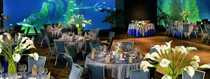 Weddings   Adventure Aquarium   Camden, NJ
