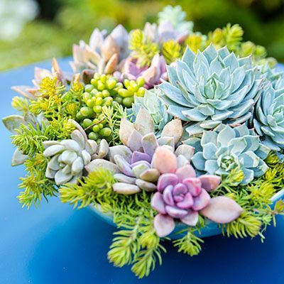 Bowl of succulents - Container Designs with Succulent Plants - Sunset