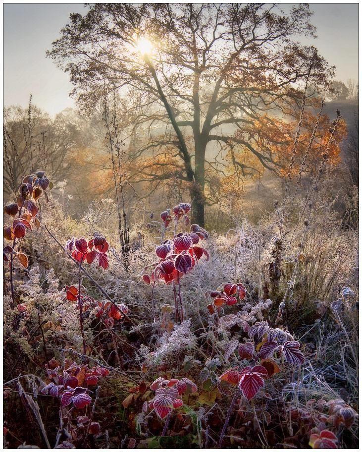 с добрым ноябрьским утром осенне-зимние картинки отечественных производителей своя