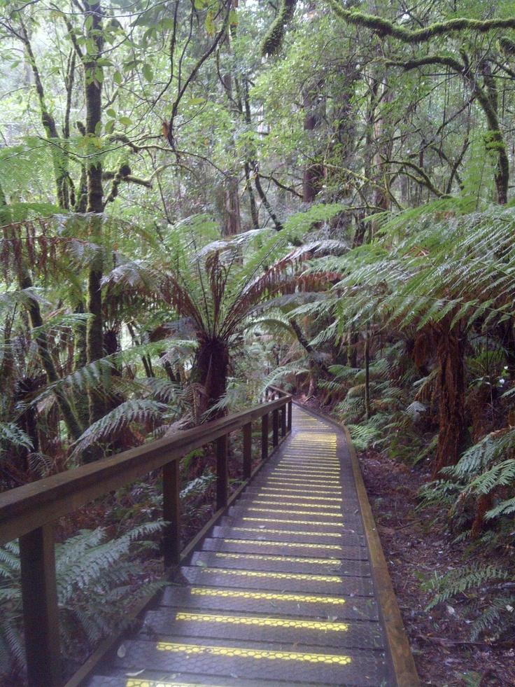 Tree Top Adventures - Great Ocean Road, Australia
