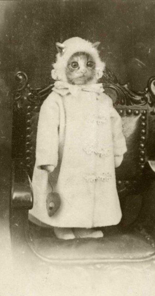 Bizarre vintage photo of cat