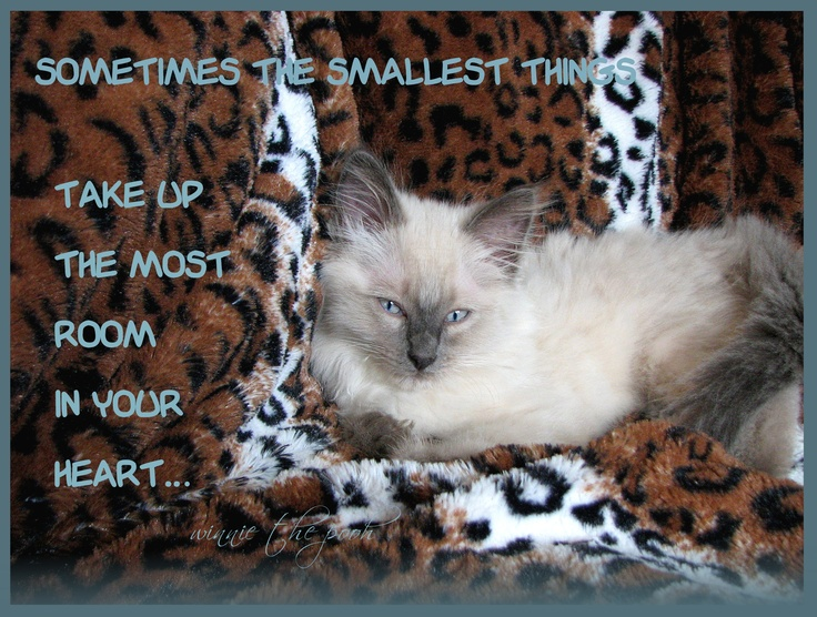 my kitten, Alejandro. and yes i named him after the lady ga ga song.  i added a cute quote i saw on the web from winnie the pooh