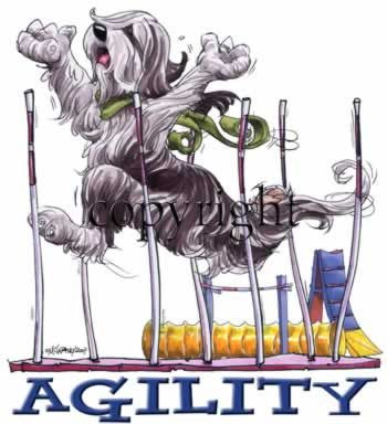 Bearded Collie Agility 2