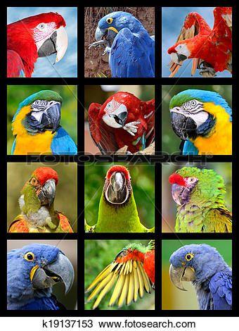mosaico, fotografias, de, papagaios Ampliar Foto