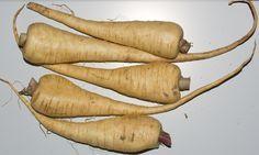 Todo lo que debes saber para cultivar chirivía