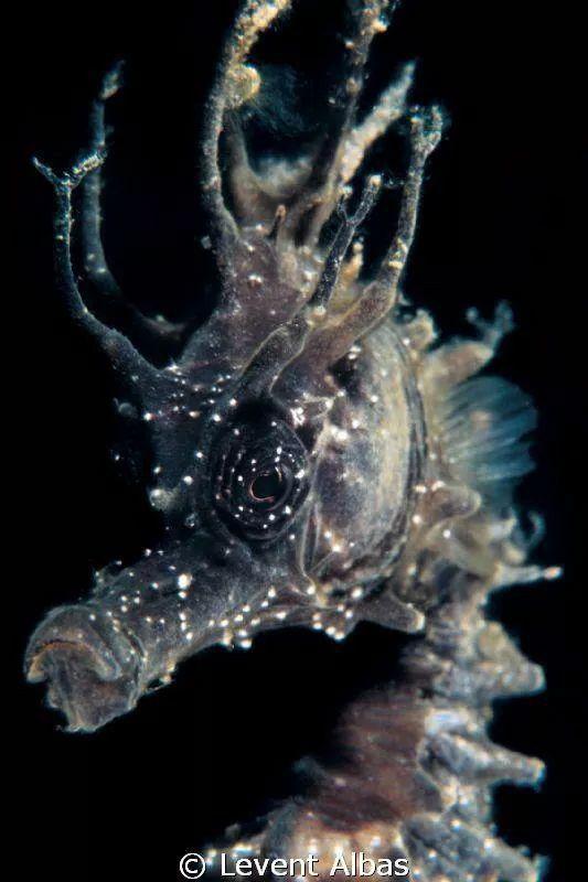 Seahorse. Underwater wonder.  It looks like a fictional image