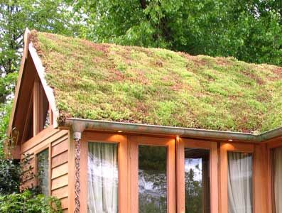 -Sedum roof.  absorbs rainwater, lowers temperature, and doesn't need trimming!   You have to have a solid structure for this, though.  This photo is nice with the copper gutters and rain chains.