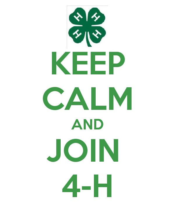 91 Best 4 H Images On Pinterest 4 H Ideas For Projects And
