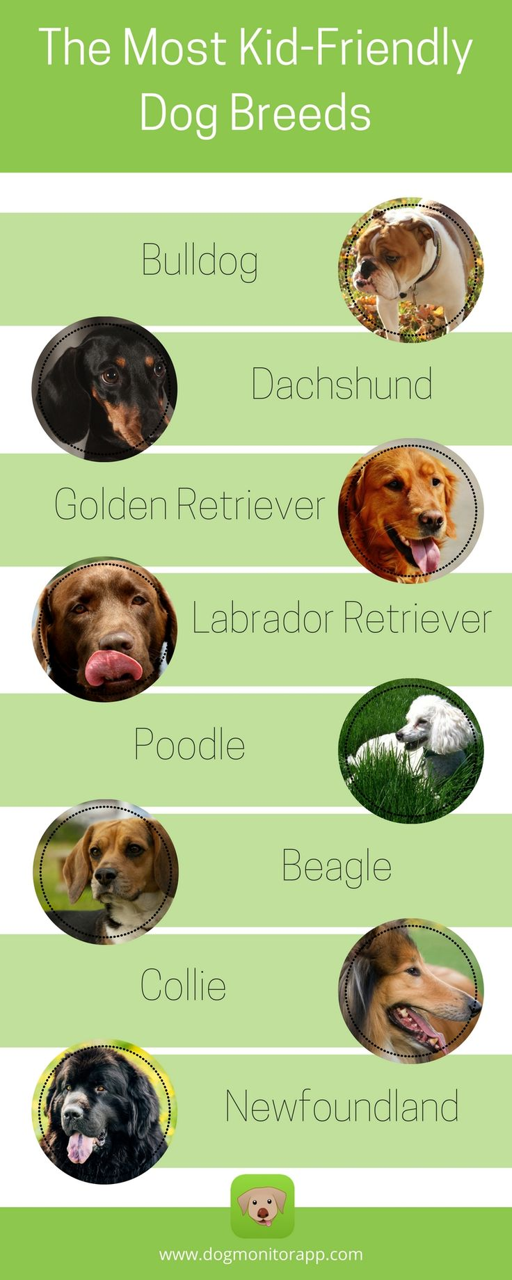 The Most Kid Friendly Dog Breeds