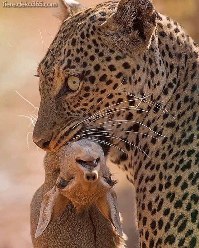 Schone Fotos Von Grossen Wilden Tieren Wild Animals Photos Animals Wild Animal Photo