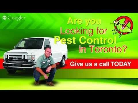 Best Pest Control Service Suppliers