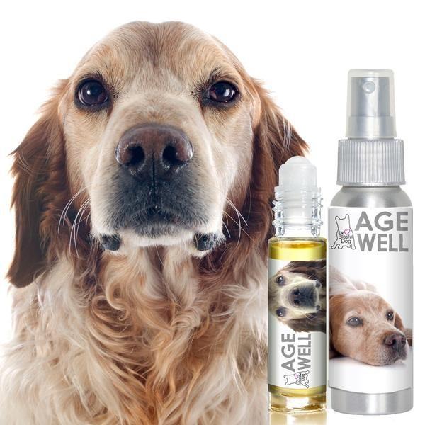 AGE WELL SENIOR BRITTANY SPANIEL DOG AROMATHERAPY