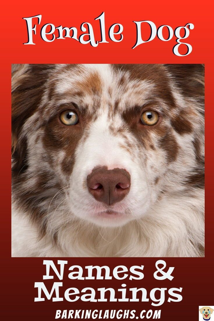 Female Dog Names And Meanings Female Dog Names Funny Dog Names