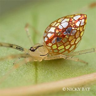 The Most Beautifully Terrifying Spiders You Never Knew Existed