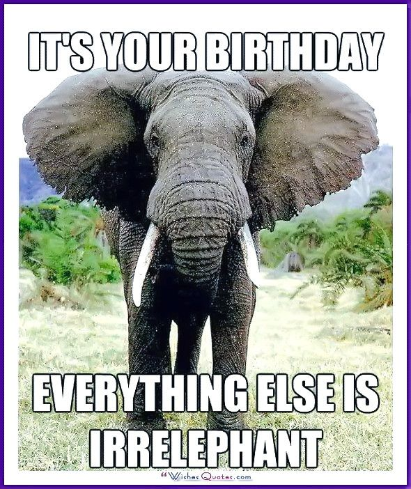 Happy Birthday Memes With Funny Cats Dogs And Animals Happy Birthday Funny Birthday Wishes Funny Birthday Humor