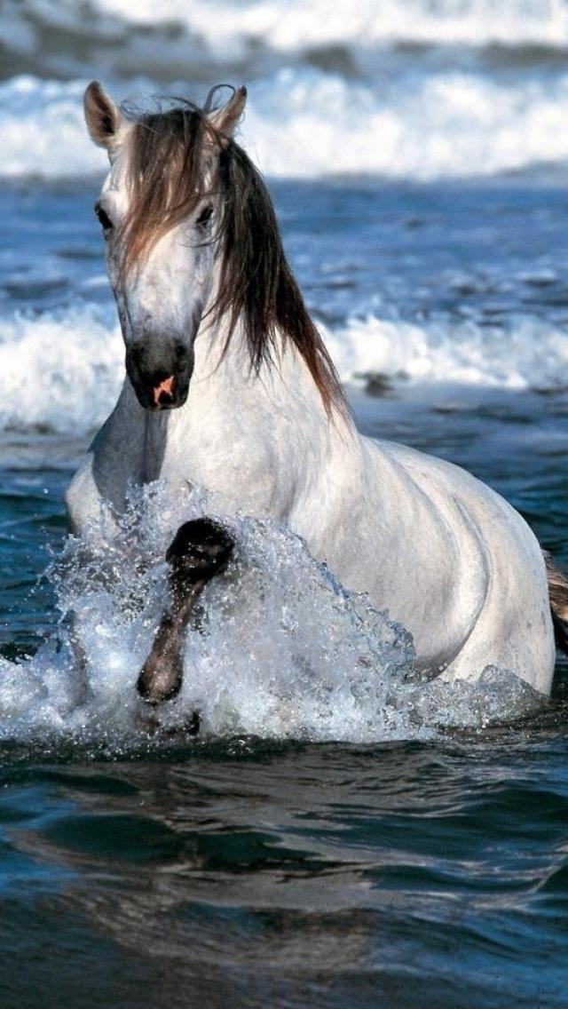 Horse enjoying the cool blue ocean