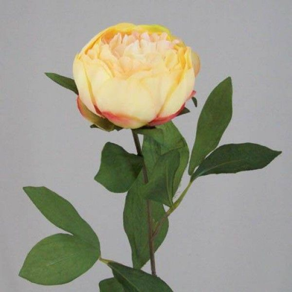 Peony Flowers Apricot - P043