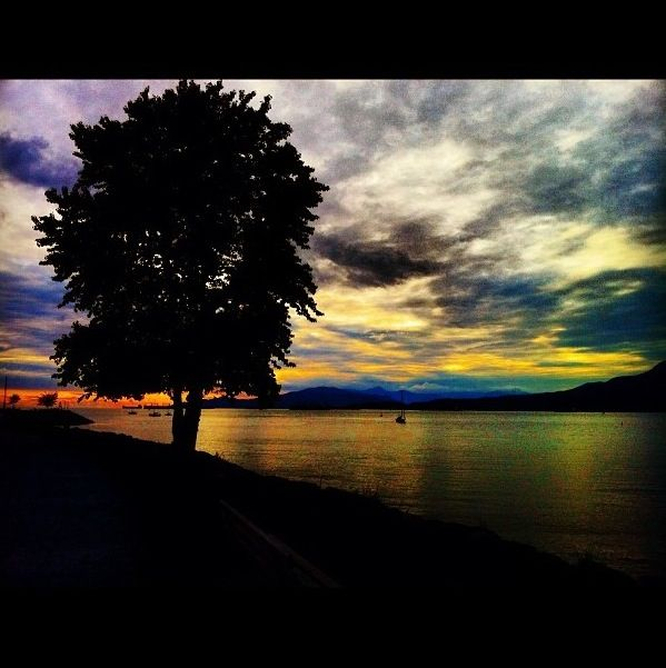 Vancouver tree sunset