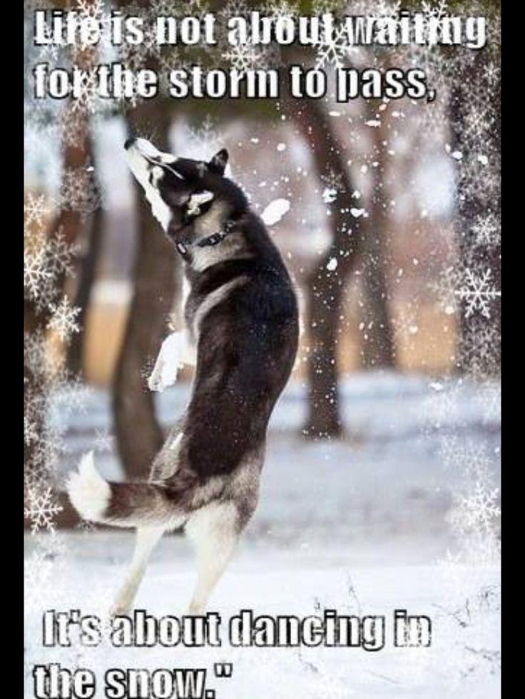 995 Best Tarot Images On Pinterest: 995 Best Images About Huskies... On Pinterest