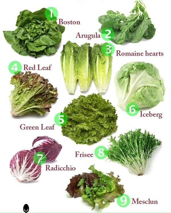 Most common types of lettuce